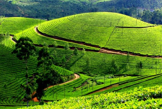 Unexplored Munnar - Kerala
